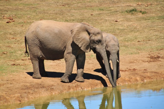 elephant water.jpg