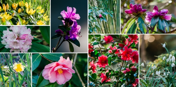 Finnerty-Gardens-Collage